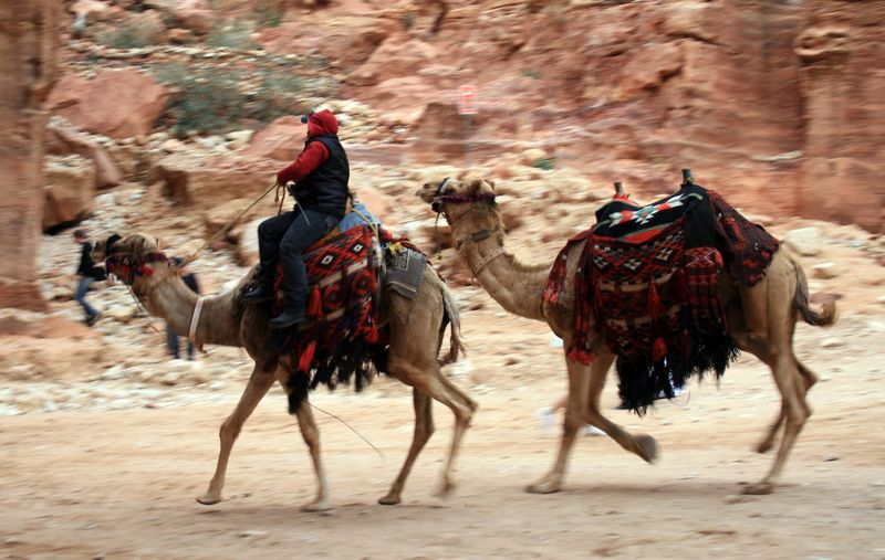 Camels in motion